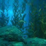 Sea Vegeatation