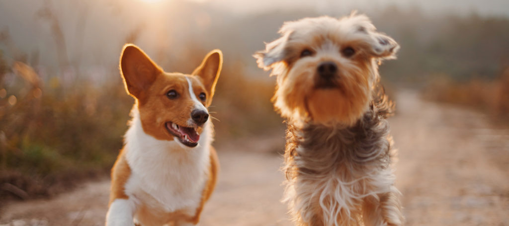 Matsun Nutrition Stock Formulas for Dogs