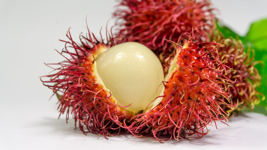 rambutan fruit in weird fruits you may not know exist